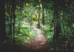 forest-path copy